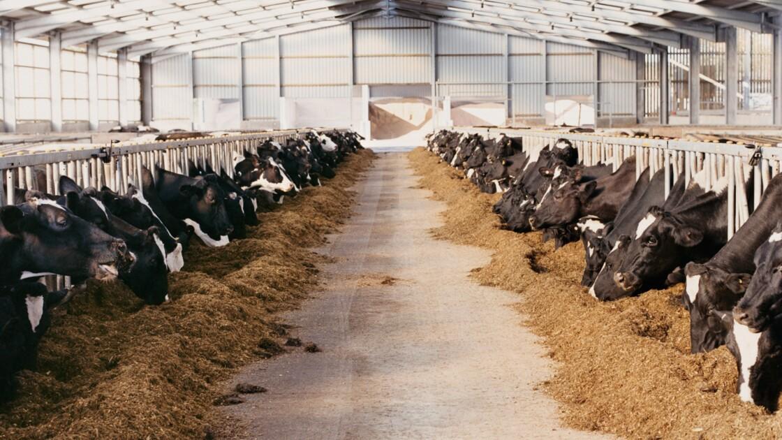 Les fermes géantes sont-elles compatibles avec l'agriculture écologique ?