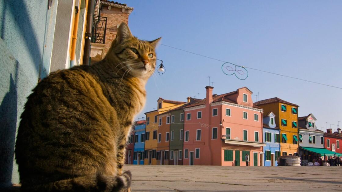 Venise : à la recherche du chat perdu
