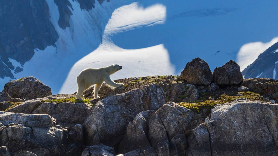 Cours de défense contre les ours polaires dans l'université la plus septentrionale du monde