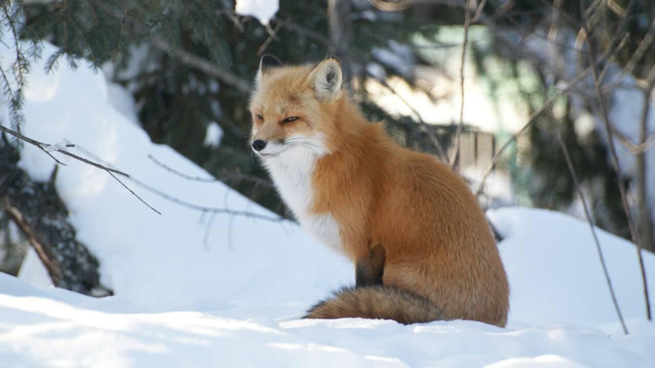 PHOTOS : Des animaux parés pour l'hiver
