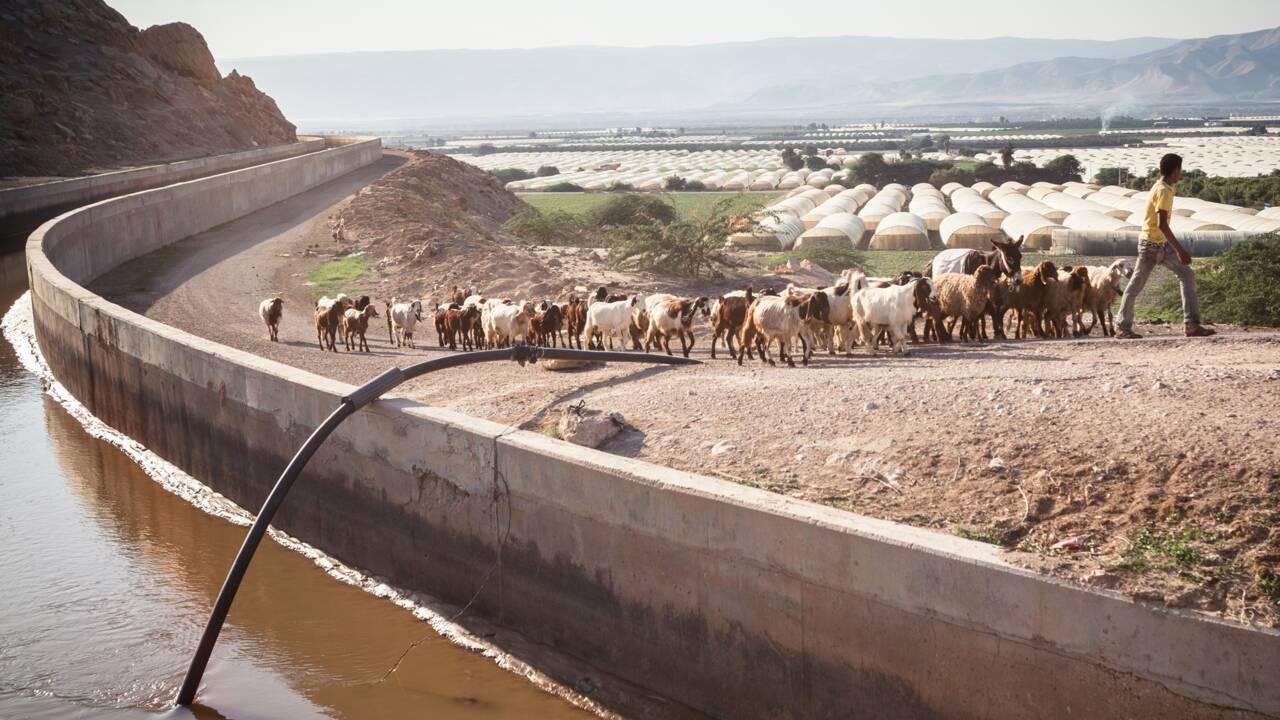 VIDÉO - Requiem pour le fleuve Jourdain : le récit de notre photographe