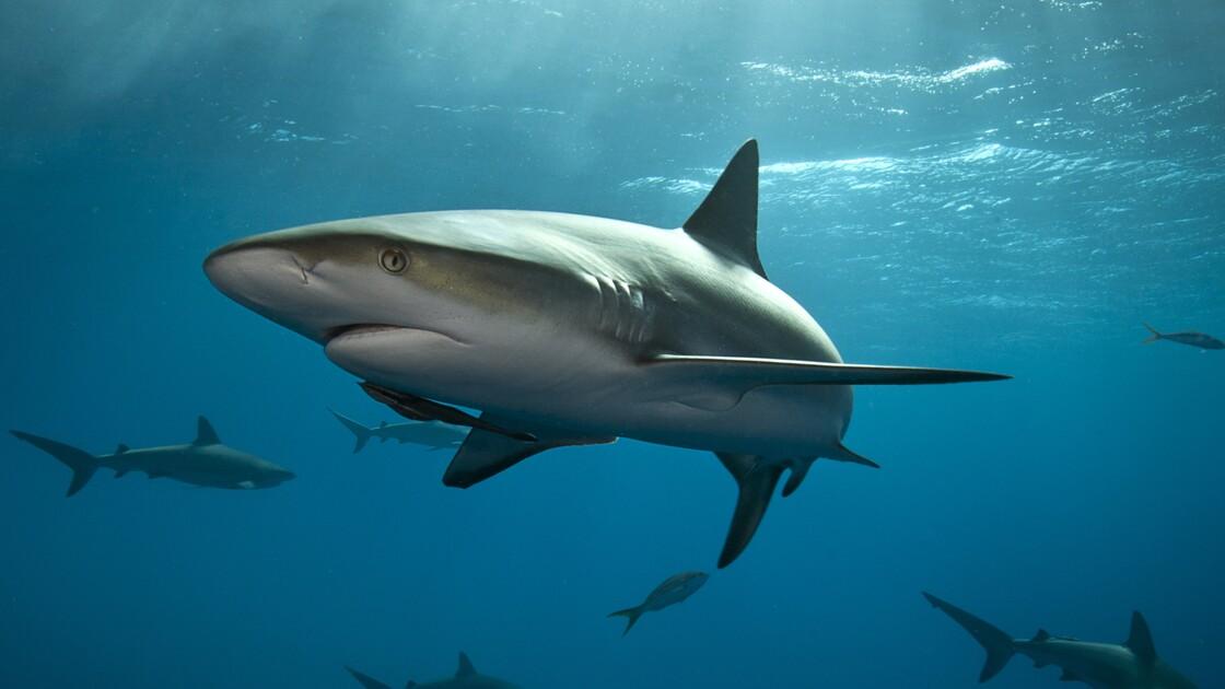 Pourquoi il faut aimer les requins