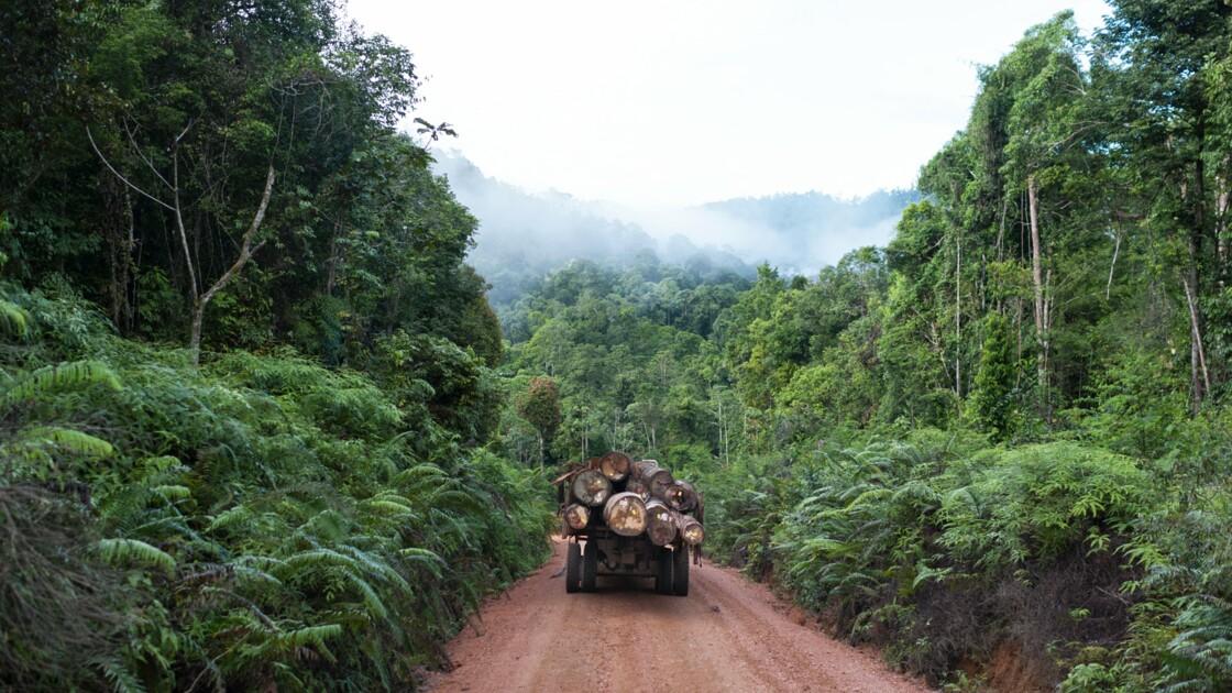 Déforestation en Indonésie