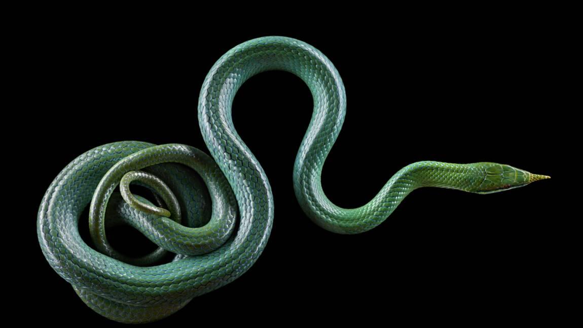 Que savez-vous sur les serpents ?
