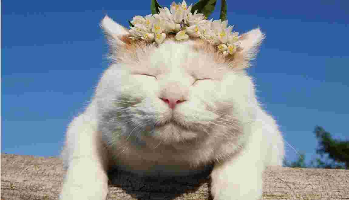 Marée chatte