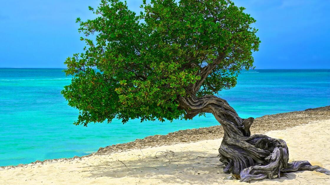 Aruba, l'île dorée des Hollandais