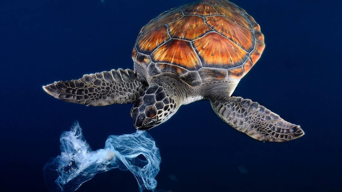 Un océan de plastiques