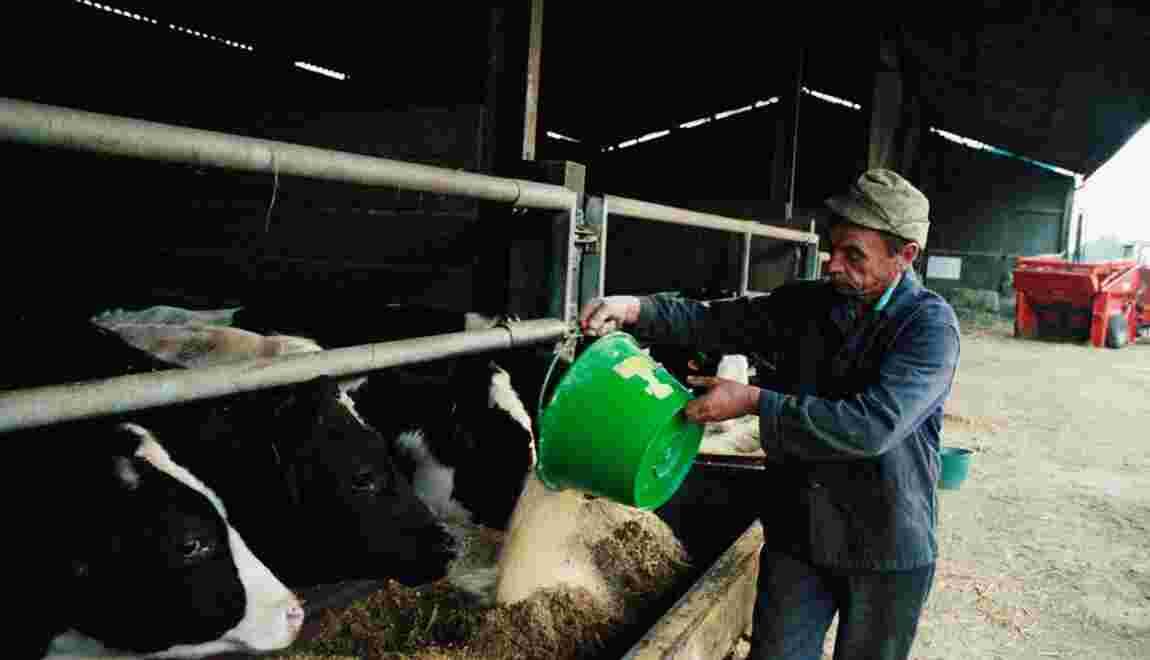 Faut-il réintroduire les farines animales en France ?
