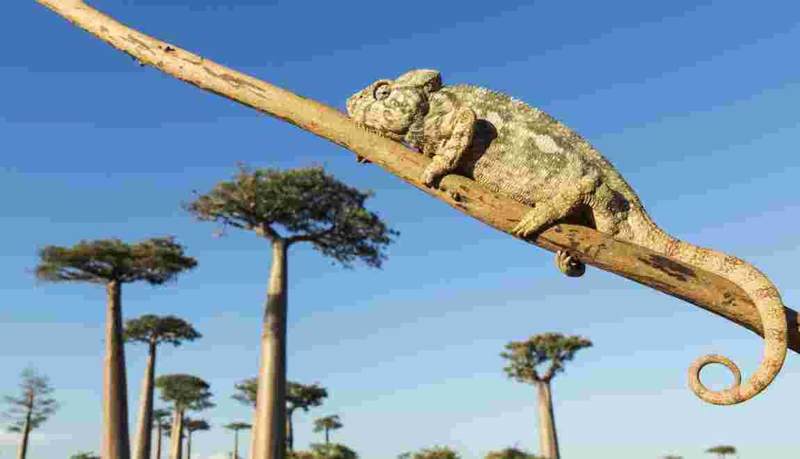 Madagascar mise sur l'écotourisme
