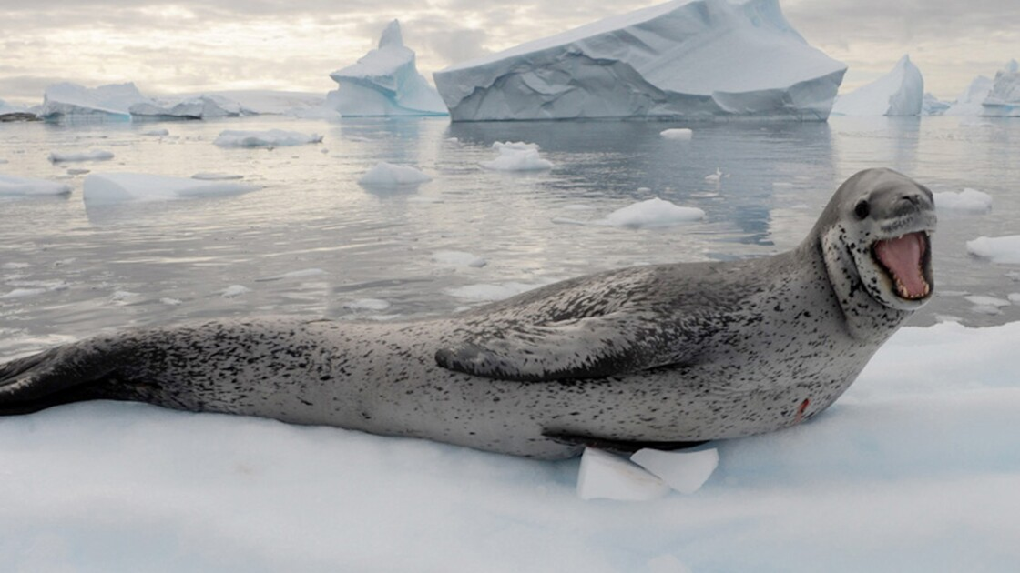 Hommage en photos au monde marin