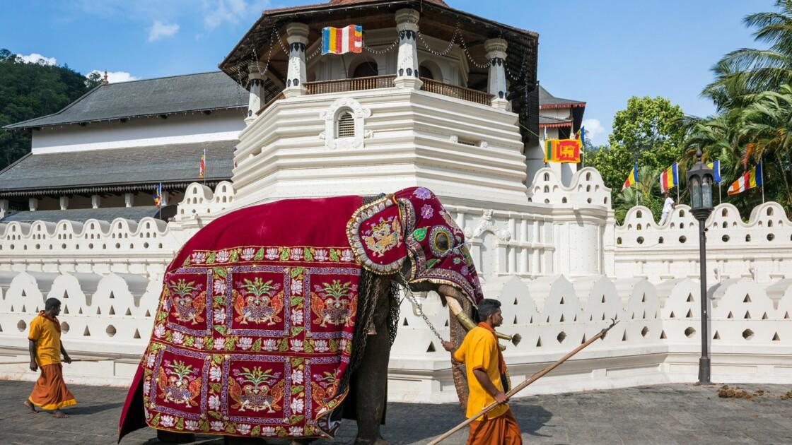 Sri Lanka : Kandy, la cité des éléphants
