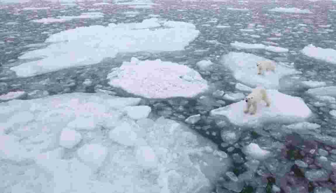 """""""Ce qui se passe en Arctique n'est qu'un aperçu de ce qui attend la planète"""""""