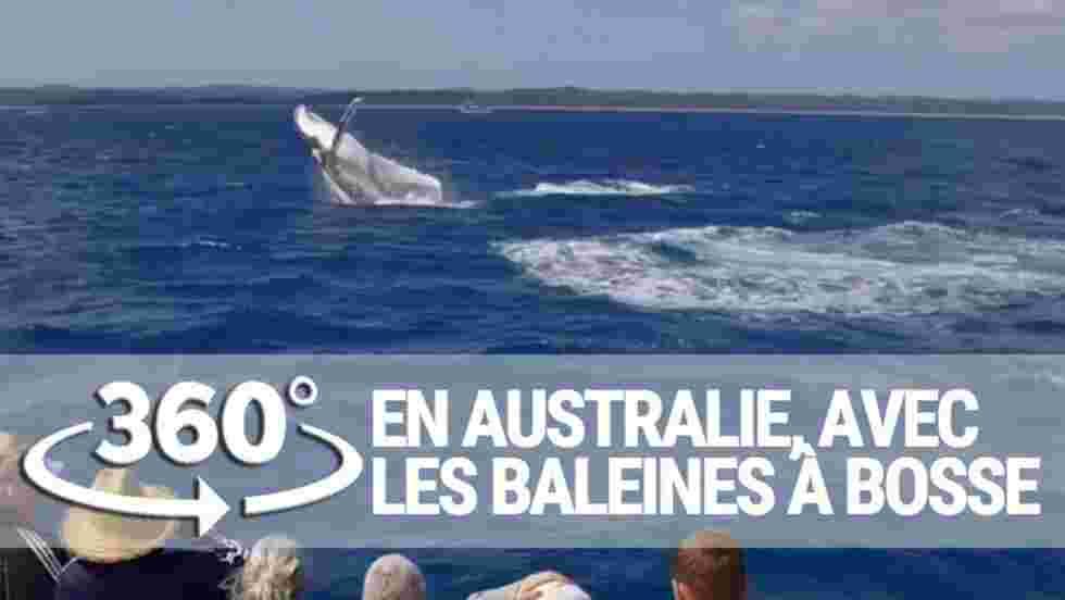VIDÉO 360° - À la rencontre des baleines à bosse