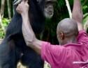 Côte d'Ivoire: Ponso, dernier survivant de l'île aux chimpanzés