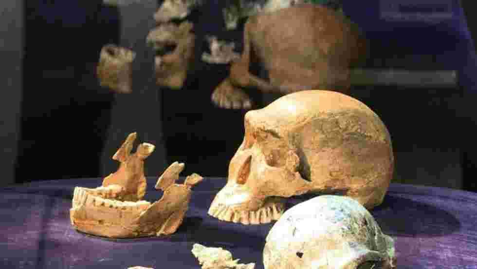Hominidés primitifs et hommes modernes se sont peut-être croisés en Afrique
