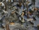VIDÉO 360° – La chasse au crabe en Martinique