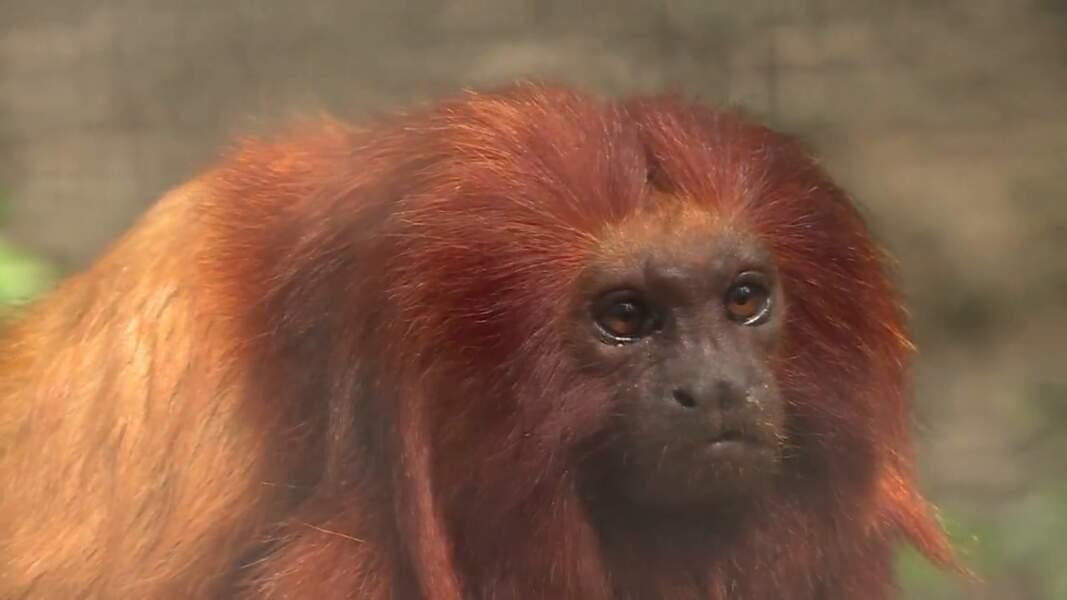 VIDÉO - La Palmyre, un zoo très investi dans la préservation des espèces