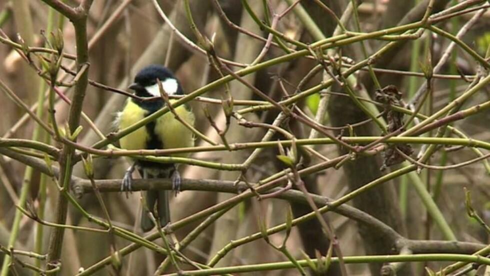 VIDÉO - Les oiseaux des campagnes disparaissent massivement