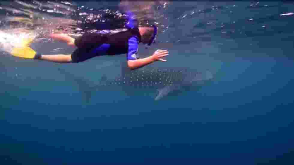 VIDÉO - Plongez avec des requins-baleines à Ningaloo Reef, en Australie
