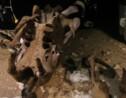 Un paresseux préhistorique découvert au Mexique
