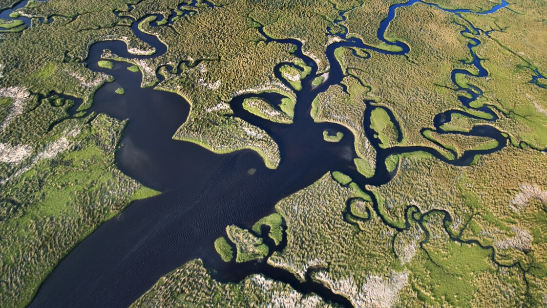 Les Everglades, une jungle en Floride