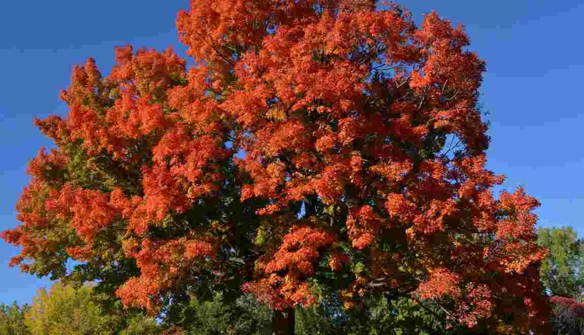 10 superbes photos aux couleurs de l'automne