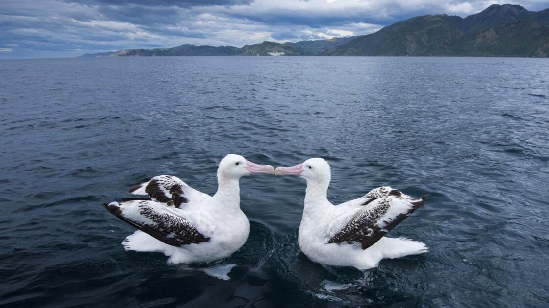 PHOTOS - Ces animaux qui restent en couple toute leur vie