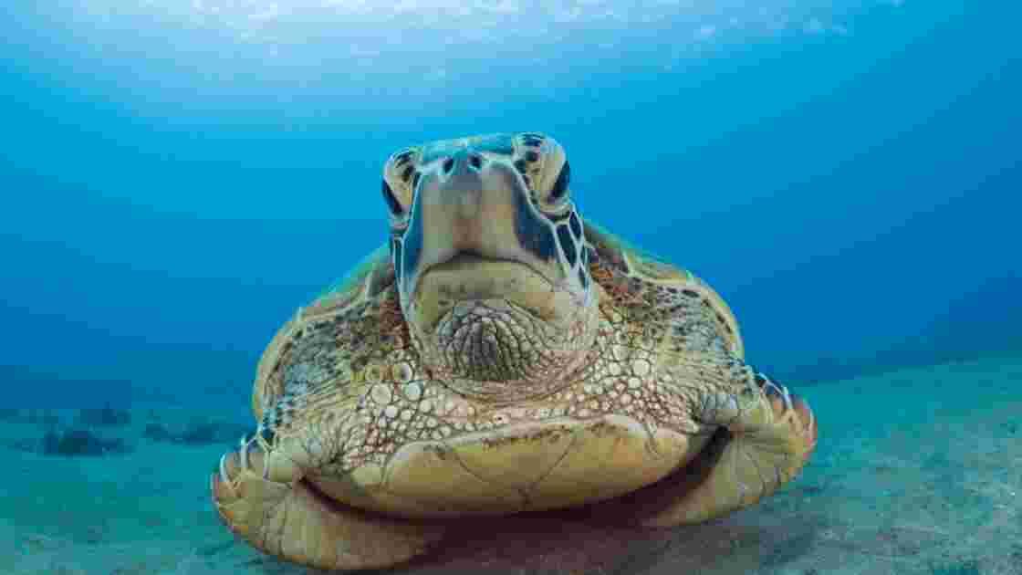 PHOTOS - Polynésie : un aquarium XXL à protéger