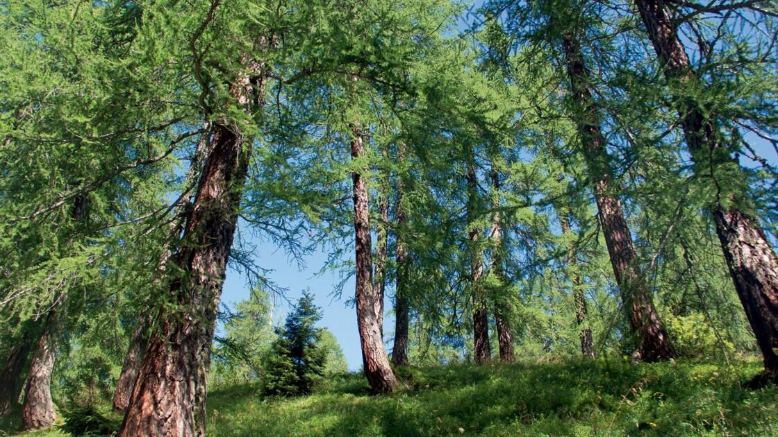 PHOTOS - Promenons-nous dans les bois... avec Peter Wohlleben