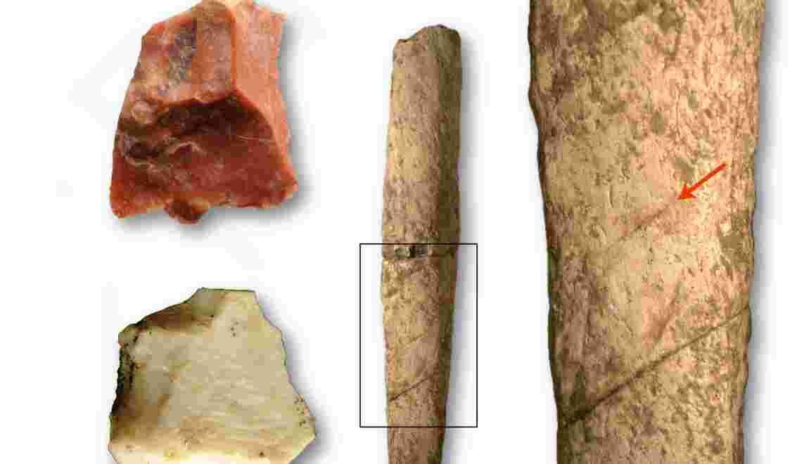 L'Homme aux Philippines dès 700.000 ans? La piste du rhinocéros