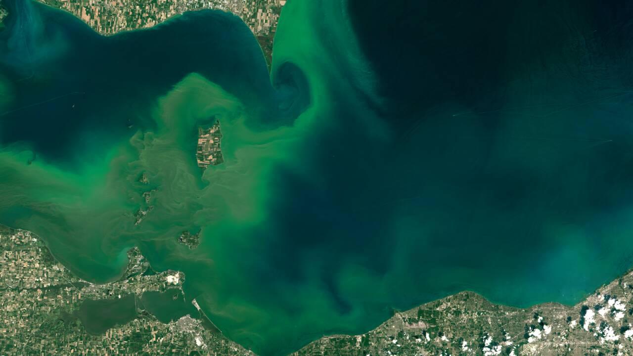 Algues vertes, algues bleues: de nombreux milieux aquatiques étouffent