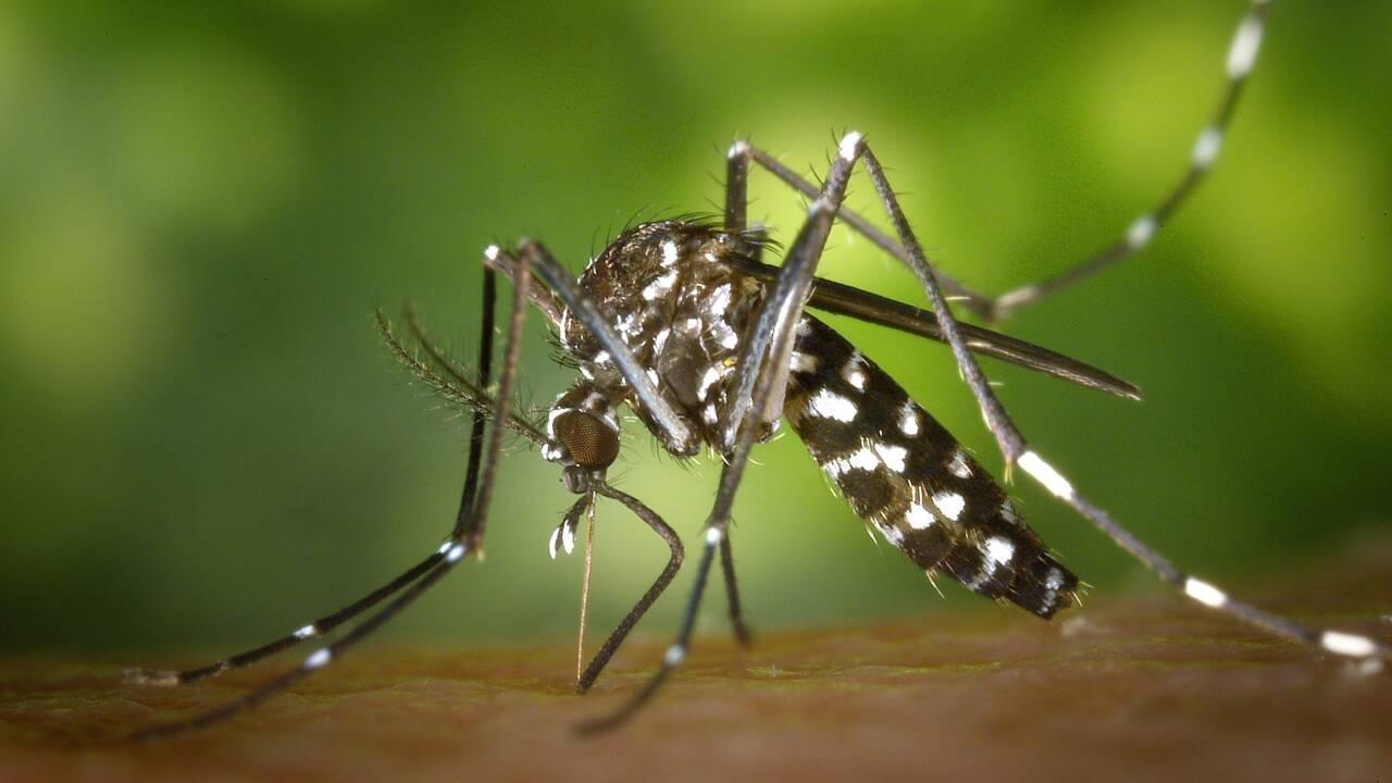 Faut-il avoir peur du moustique tigre ?
