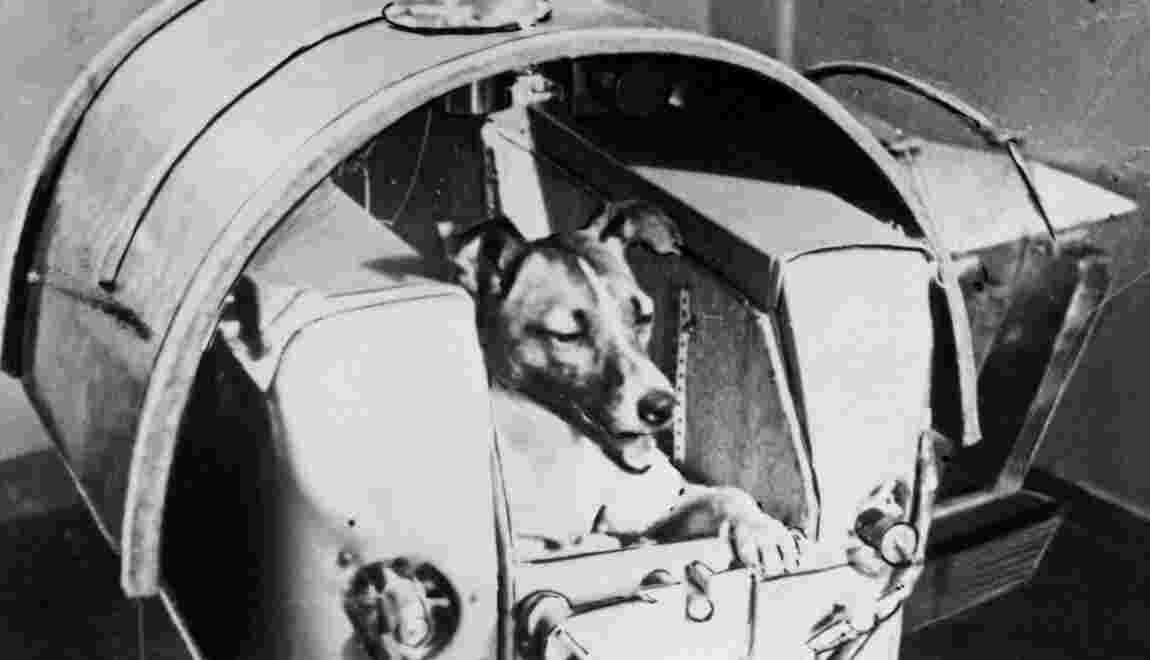 Il y a 60 ans, l'URSS envoyait la chienne Laïka dans l'espace