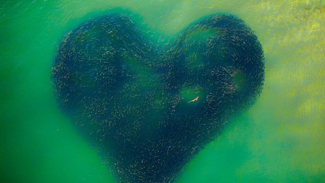 Les plus belles photos aériennes gagnantes des Drone Awards 2020