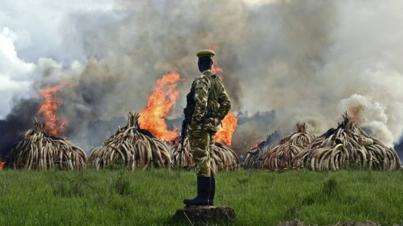 Le braconnage des éléphants prive le tourisme africain de 25 millions de dollars