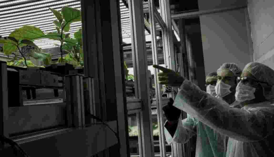 """""""Usine à végétaux"""" en milieu urbain: un prototype dévoilé à Lyon"""