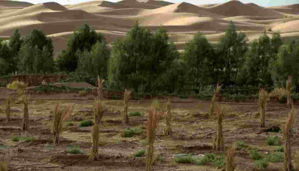 Au Maroc, les oasis toujours plus menacées par l'avancée du désert