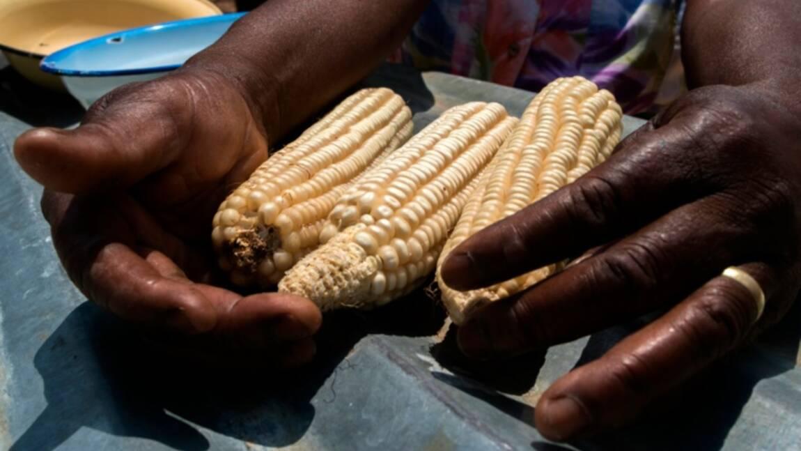 Face à la sécheresse, le salut des agriculteurs zimbabwéens passe par la science