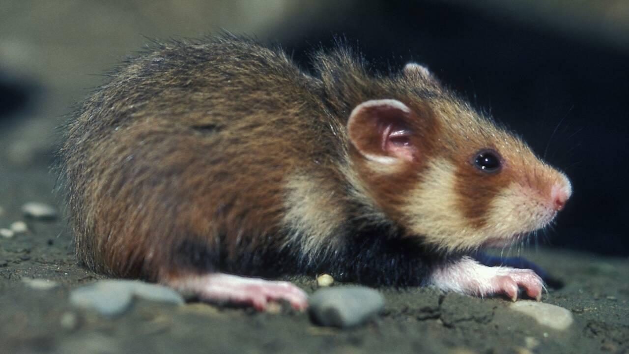 Climat: l'Académie des sciences s'alarme du sort de la biodiversité