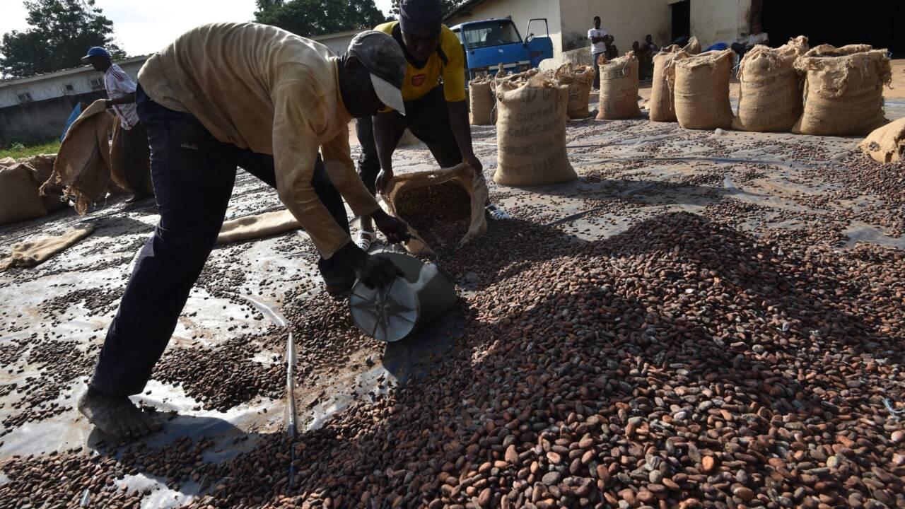"""Journée mondiale du chocolat: C'est quoi du """"cacao durable""""?"""