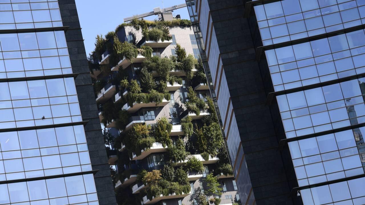 """Les """"forêts verticales"""" de Milan s'exportent de la Chine aux Pays-Bas"""
