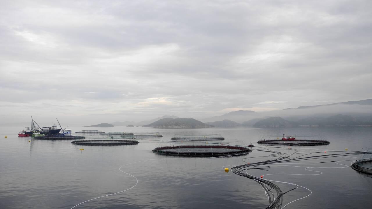 Saumon: les projets pharaoniques de la Norvège