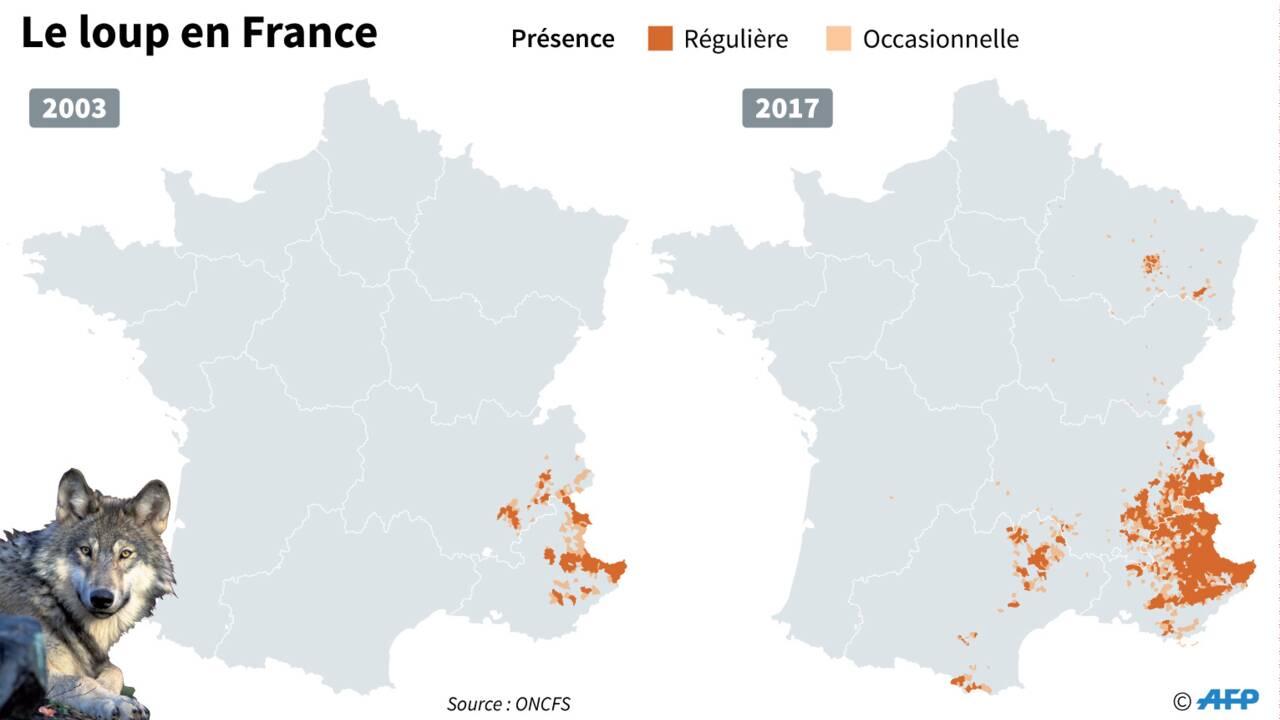 """La France en pleine """"guerre du loup"""""""