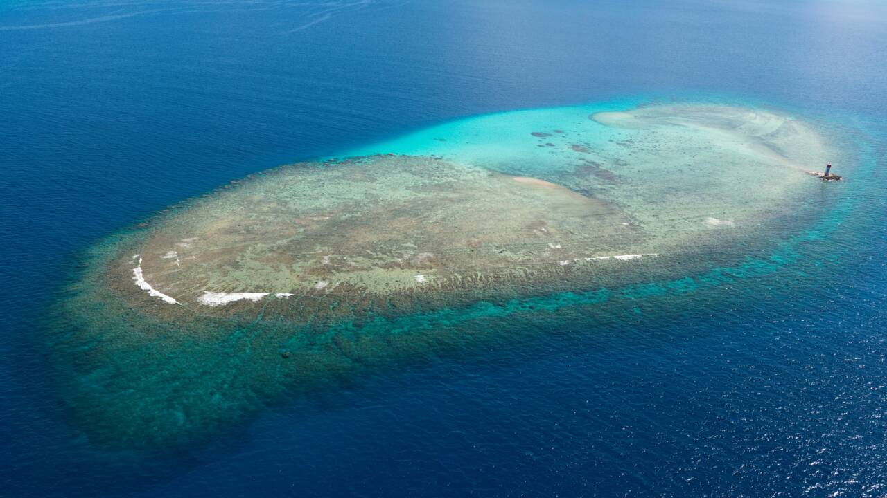 Loin des atolls du Pacifique, le séquençage au secours des coraux