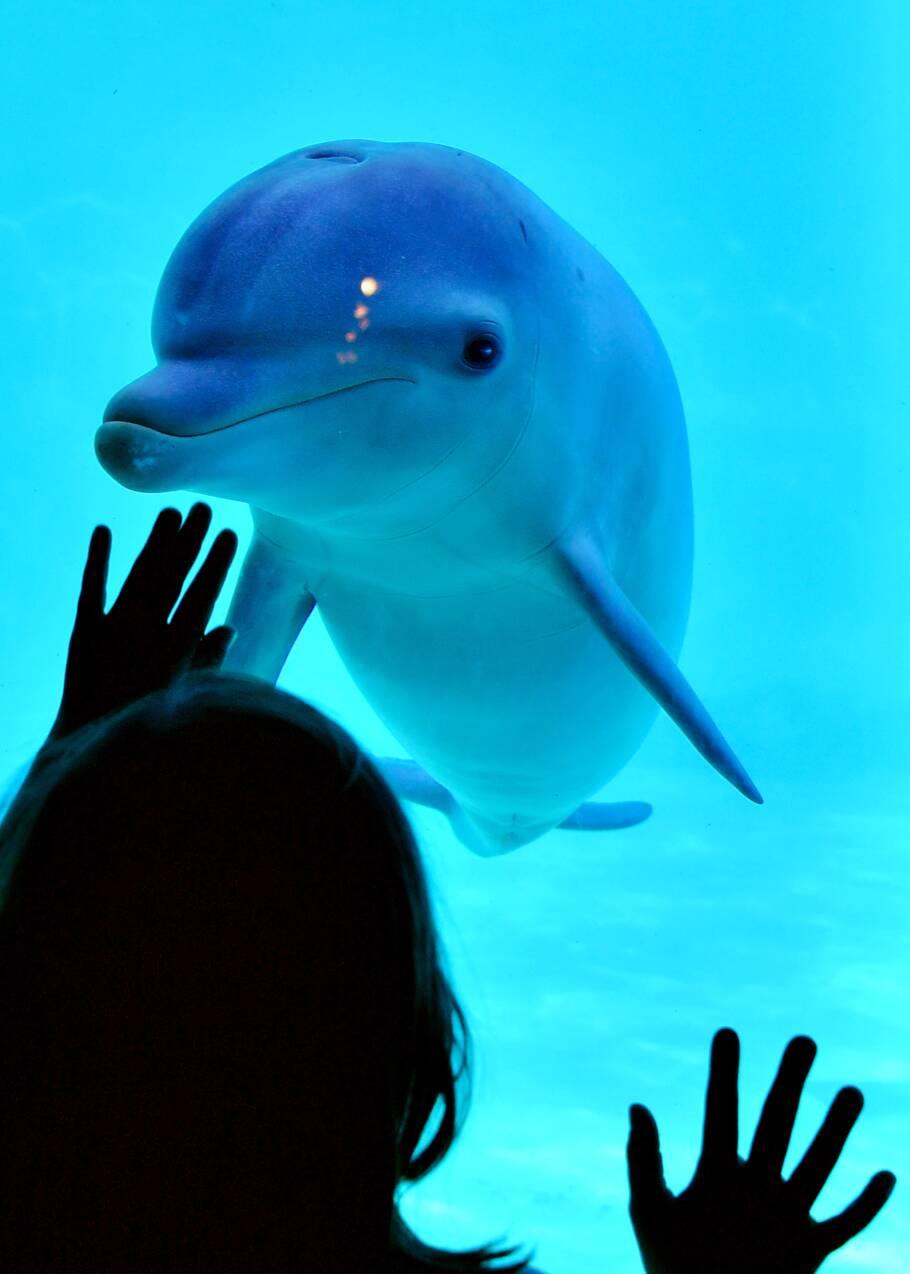 La reproduction des dauphins en captivité peut continuer, colère des ONG
