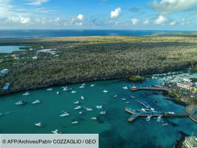 S'adapter pour survivre : science et tourisme sur les pas de Darwin aux Galapagos