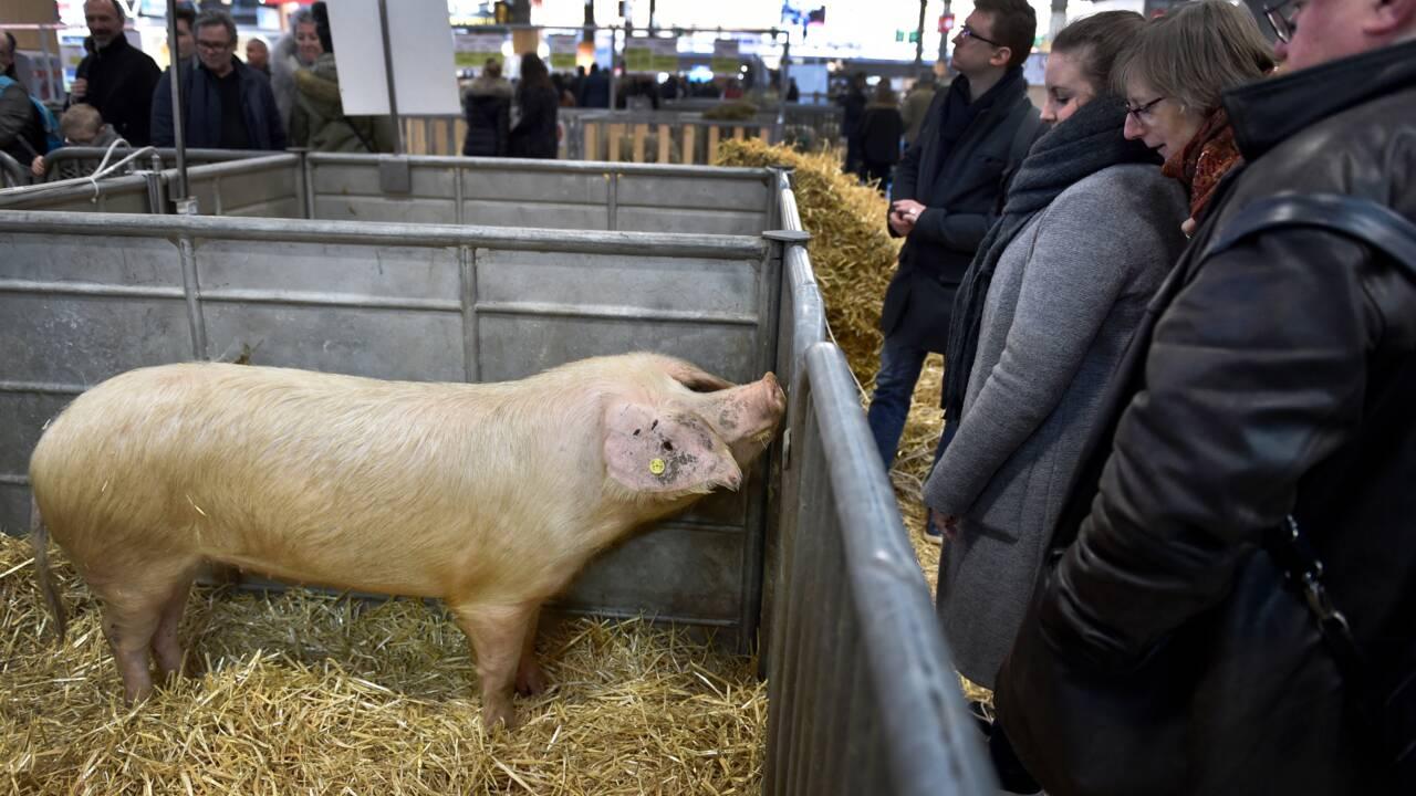 La filière porcine va monter en gamme, sans négliger la compétitivité