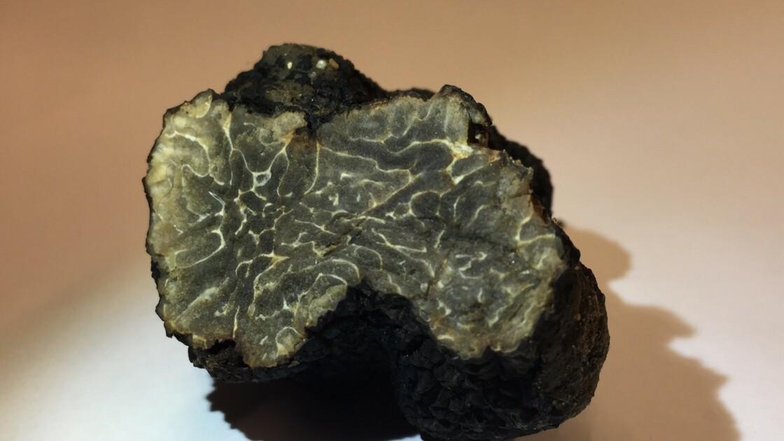 L'étonnante découverte d'une truffe sauvage sur un toit de Paris