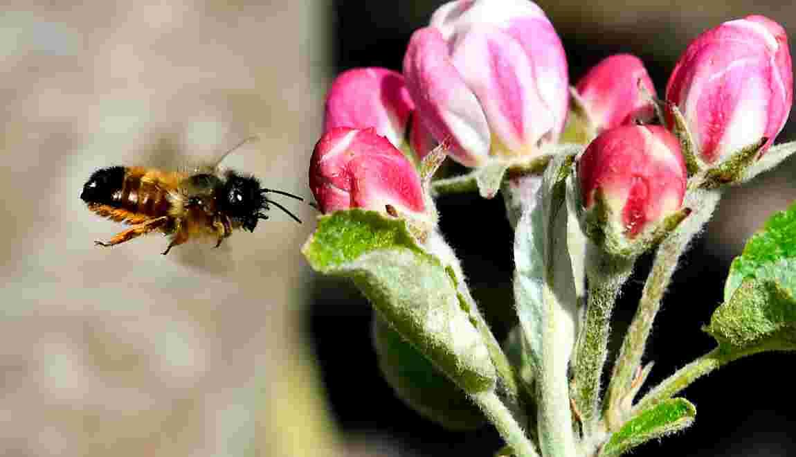 """Des lycéens inventent une fleur """"connectée"""" pour mieux connaître les abeilles"""