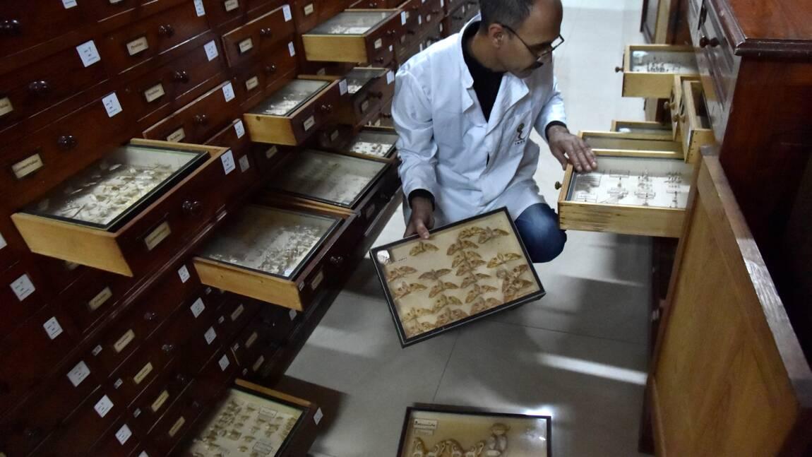 L'insectarium d'Alger à la pointe de la lutte contre les ravageurs